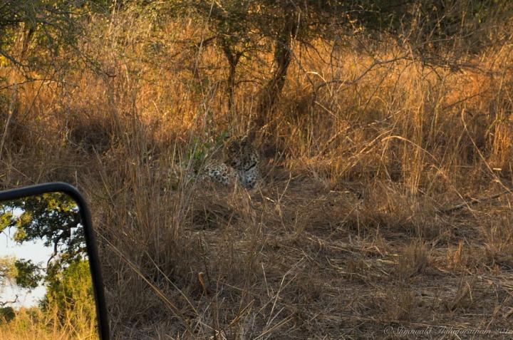 11.1437942378.spot-the-leopard.jpg