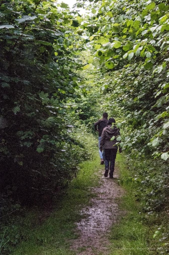 13.1468263572.walk-in-the-woods