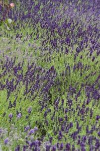 13.1468350038.in-the-secret-garden-at-highclere