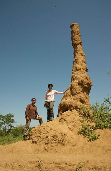 4.1386414874.giant-termite-nest