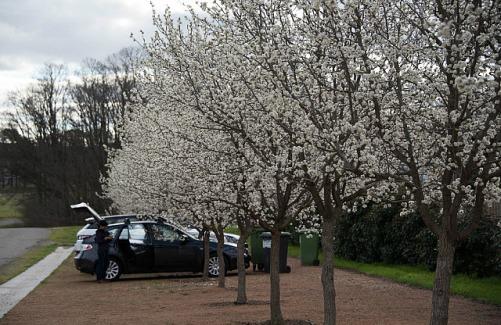 8.1410026816.cherry-blossoms-at-gundaroo